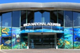 Malta National Aquarium in Qawra - dein perfekter Nachmittagsausflug!